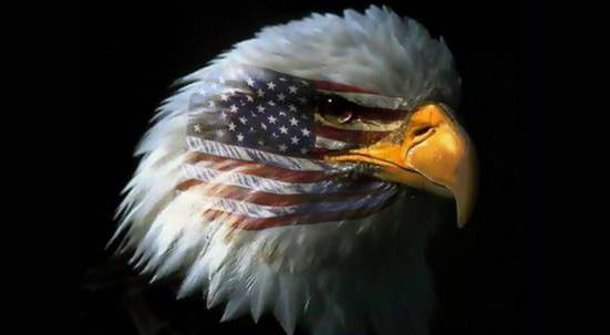 eagle resized